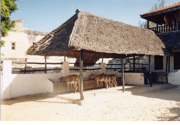 Things To Do In Lamu