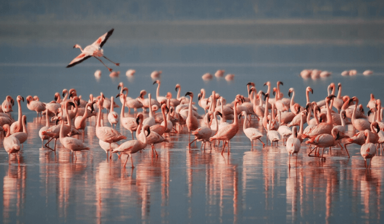 Lake Nakuru National Park Getaway Guide