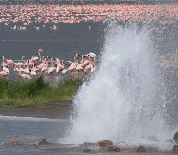 Lake Bogoria Spa Resort