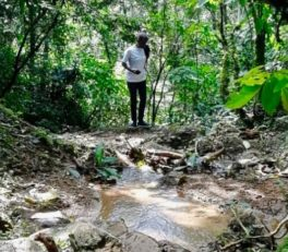 Guide To Kakamega Forest