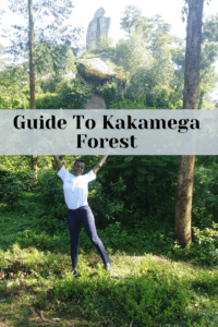 First timer's guide to Kakamega Forest