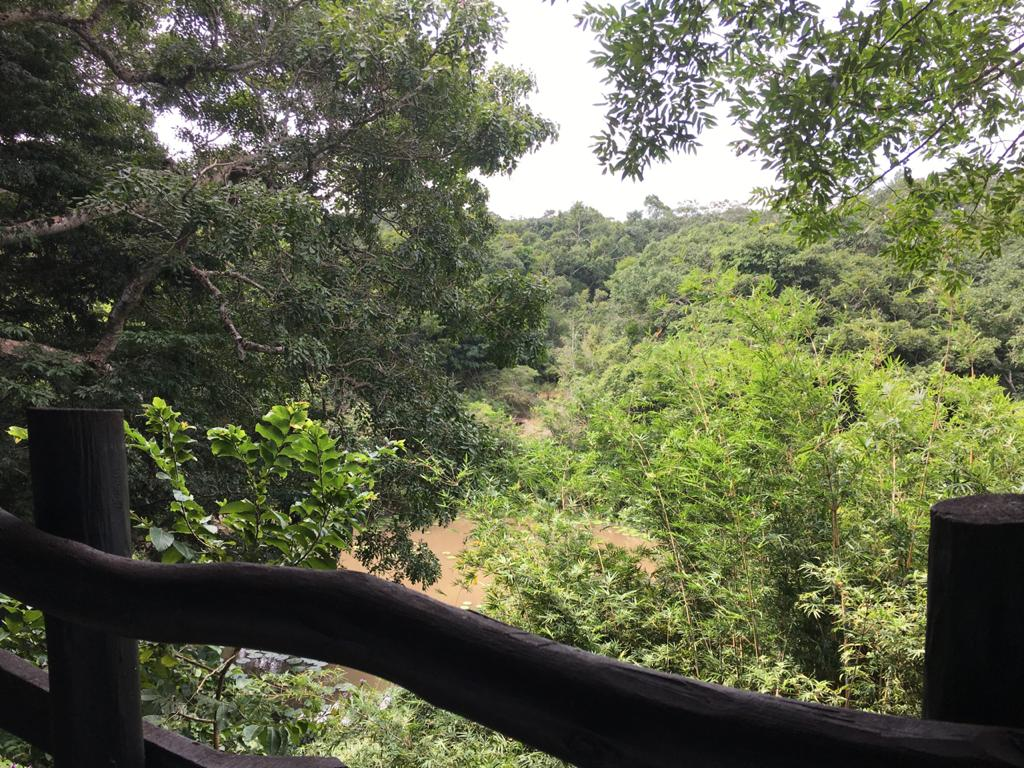 Views of the forest from the restaurant at Shimba Hills Lodge